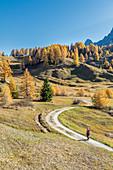Alta Badia, Bolzano province, South Tyrol, Italy, Europe. Autumn on the Armentara meadows