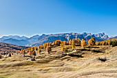 Alta Badia, Bolzano province, South Tyrol, Italy, Europe. Autumn on the Armentara meadows, above the moantains of the Marmolada, Puez and Odle