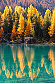 Autumn reflections at Saoseo Lake, Poschiavo Valley, Canton of Graubuenden Switzerland, Europe