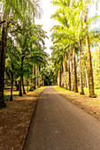 Palm tree lined footpath, Pamplemousses Botanical Garden, Mauritius
