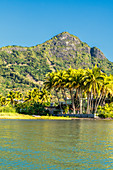Lush palm trees and mountains facing the tropical bay, La Gaulette, Black River district, Indian Ocean, Mauritius