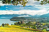 Vineyards around the village of Spiez on shores of lake Thun,  canton of Bern, Switzerland
