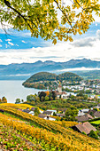 Spiez village on shores of lake Thun surrounded by vineyards, canton of Bern, Switzerland