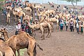 Animal market of Bati, Amhara Region, Oromia, Ethiopia, Africa