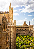 A high view of Seville Cathedral's Patio de los Naranjos, from Giralda Tower. Seville Cathedral, Seville, Andalucia, Spain