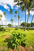 Lydgate State Park, Kauai island, Hawaii, USA