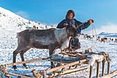 A reindeer herder catches a reindeer. Polar Urals, Yamalo-Nenets autonomous okrug, Siberia, Russia