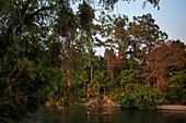 """Boat in the Mekong near the """"Four Thousand Islands"""", Laos, Asia"""