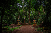 Statues in the jungle from the Bolaven Plateau, Laos, Asia