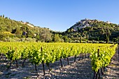 France, Vaucluse, regional natural reserve of Lubéron, Gordes, certified the Most beautiful Villages of France, vineyard at the foot of the village