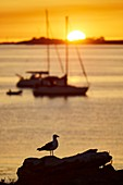 France, Finistere, Fouesnant, Archipelago Glenan (Glenan islands), Penfret Island, Boats at anchor on the West of the island at sunset