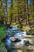 France, Alpes de Haute Provence, Mercantour National Park, Haut Verdon, the plateau of Laus, river of Chadoulin