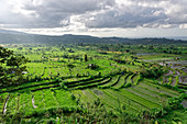 Fantastic travel fields near Tirtaganga in the east of Bali, Indonesia, Southeast Asia, Asia
