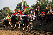 Makepun, buffalo race, not far from the city of Negara on Bali, Indonesia, Southeast Asia, Asia