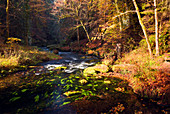 Kamnitz, river, autumn, foliage color, national park, Bohemian Switzerland, Czech Republic, Europe