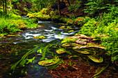 Kamnitz, Fluss, Kurve, Sommer, Mezni Louka, Nationalpark, Böhmische Schweiz, Tschechien, Europa\n