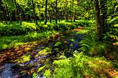 Kamnitz, Fluss, Sommer, Sommerfrische, Nationalpark, Böhmische Schweiz, Tschechien, Europa\n