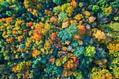Abstrakt, Luftaufnahme, Laubfärbung, Herbst, Wald, Harz, Sachsen-Anhalt, Deutschland, Europa\n
