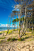 West beach, beach, forest, Baltic Sea, Ahrenshoop, Mecklenburg-Western Pomerania, Germany, Europe