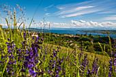 Lake Constance panorama, near Überlingen, Lake Constance, Baden-Württemberg, Germany