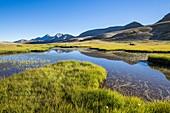 France, Alpes de Haute Provence, National Park of Mercantour, Haut Verdon, Colmar, peat bogs of the plateau of the lake Lignin (2276m)