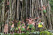 France, French Polynesia, Marquesas archipelago, Nuku Hiva island, Hatiheu, Tohua Kamuihei archaeological site, Marquesan dance at the foot of the banyan tree (Ficus benghalensis)