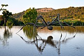 France, Bouches du Rhone, Le Puy Sainte Reparade, Chateau La Coste vineyard and contemporary art center, Crouching Spider 6695 by Louise Bourgeois (Mention Obligatoire)