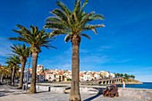 France, Pyrenees Orientales, Cote Vermeille, Banyuls-sur-Mer, esplanade along the Central Beach and the old cannon symbol of the city