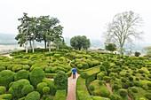 France, Dordogne, Perigord Noir, Dordogne Valley, Vezac, Marqueyssac castle, topiary gardens designed by one of Le Notre student