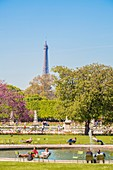France, Paris, area listed as World Heritage by UNESCO, the Tuileries Garden and the Eiffel Tower in the spring