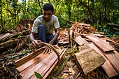 France, French Guiana, Kourou, Wapa Lodge, Carpenters cutting a red wapa, a preferred tree for the shingles of the lodge because resistant to twenty years