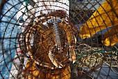 France, Pyrenees Orientales, Banyuls sur Mer, artisanal fishing, lobster fishing off Banyuls