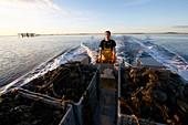 France, Herault, Marseillan, oyster farming, Tarbouriech company, oyster farming, shellfish farmers