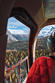 Helicopter above Canadian Rockies with larches turning yellow during fall,Alberta,Canada