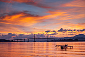 Sunset over the harbour in Ambon city showing the suspension bridge and an outrigger boat, Ambon, Moluccas (Maluku), Indonesia, Southeast Asia, Asia