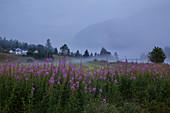 Dawn on the Otra at Helle, Rysstad, Setesdalen, Aust-Agder, Norway, Europe