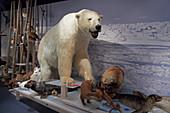 Eisbärenclub, The Royal and Ancient Polar Bear Society, Hammerfest, Insel Kvalöya, Provinz Finnmark, Vest-Finnmark, Norwegen, Europa