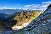 Flock of sheep at high altitude, Valgerola, Orobie Alps, Valtellina, Lombardy, Italy, Europe