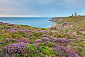 Blooming heathland with sea view and lighthouse at Cap Frehel, Brittany, France.