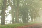 Bäume im dichten Nebel entlang eines Schotterweges in der Normandie, Frankreich