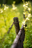 Fence post in a summer meadow, Bavaria, Germany