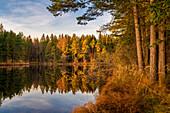 November am Pllinger Weiher, Alpenvorland, Obersöchering, Oberbayern, Bayern, Deutschland