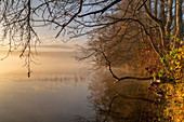 Sunny November morning at the misty Staffelsee, Uffing, Upper Bavaria, Bavaria, Germany
