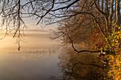Sunny November morning at the misty Staffelsee, Uffing, Upper Bavaria, Bavaria, Germany