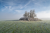 Small tree island near Etting on a foggy November morning, Etting, Upper Bavaria, Bavaria, Germany
