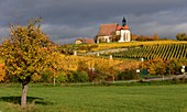 Maria in the vineyard near Volkach am Main, Lower Franconia, Bavaria, Germany