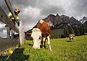at San Cassiano at the Valparola Pass with Fanes, Alta Badia, Dolomites, South Tyrol, Italy