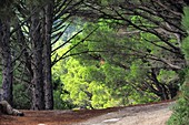 Wandern bei Marciana Alta unter dem Monte Capanne, West-Elba, Toskana, Italien