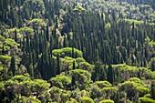 Landschaft bei Fiesole bei Florenz, Toskana, Italien
