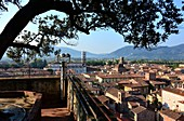 Blick vom Turm des Palazzo Guinigi, Lucca, Toskana, Italien